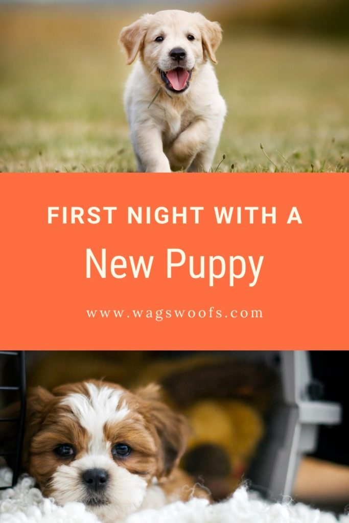 Bringing home you new puppy is an exciting & special time. Here's what to know about first night with new puppy to be prepared & welcome your new family member.