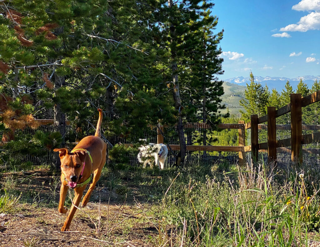 Dogs playing at the dog park at Snow Mountain ranch, which offers Colorado pet friendly cabins
