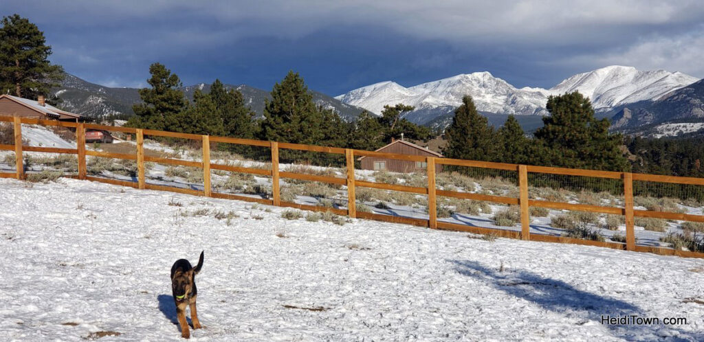 local dog park at ymca of the rockies during winter
