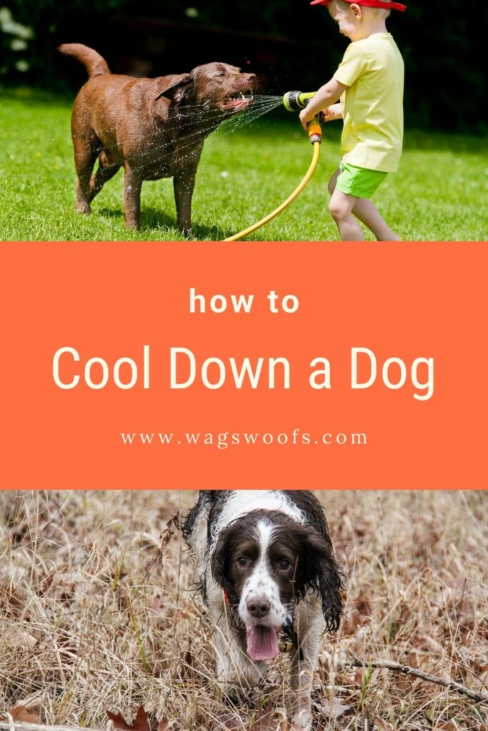 how to cool down a dog