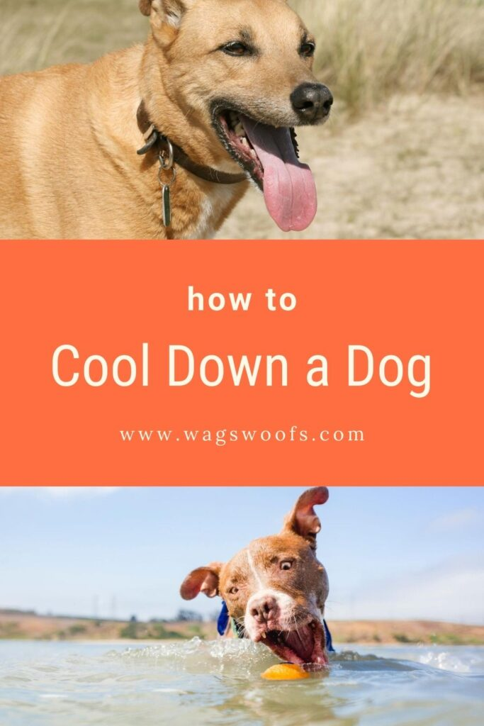 Wondering how to cool down a dog in summer, in hot weather? Read on for tips on how to keep your dog cool!